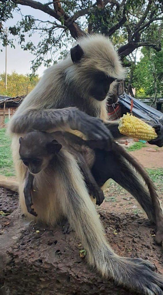 Bond of Love Feeding Animals Monkeys